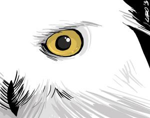 Civette (illustrazione di Giuseppe Lo Bocchiaro)