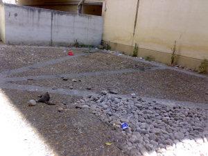 Corte di EXPA con gatto morto