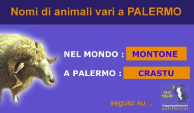 Mago Miriddu e i nomi di animali e le patologie a Palermo