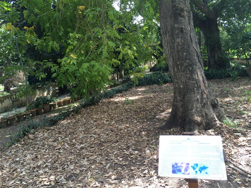 Orto Botanico di Palermo
