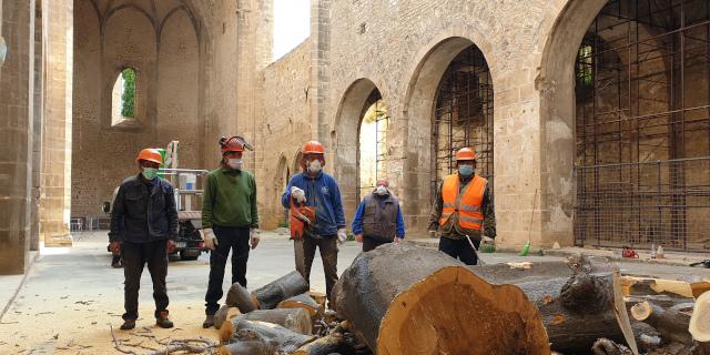 Abbattuto l'albero nella navata dello Spasimo