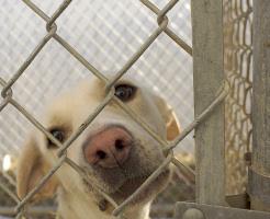 Palermo tra le prime città per l'abbandono dei cani
