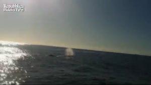 Un capodoglio al largo di Mondello, il video