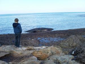 Un cetaceo spiaggiato a Carini
