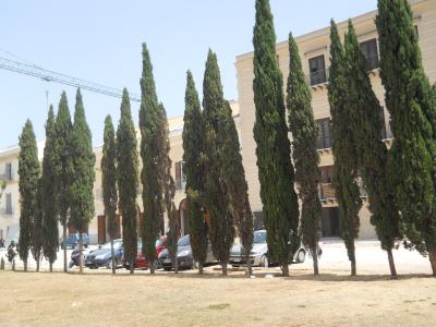I cipressi di piazza Magione