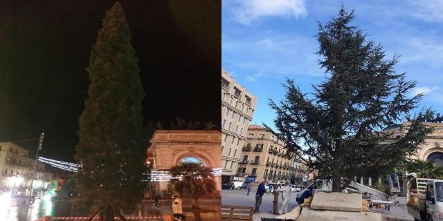 Polemiche sui social per il cedro di Natale di piazza Ruggero Settimo