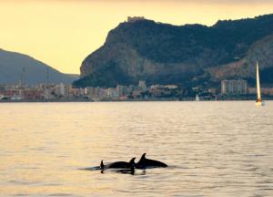 I delfini del golfo di Palermo