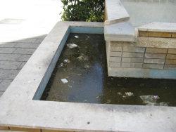 Rifiuti nella fontana di via Magliocco