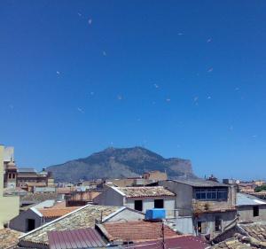Gabbiani a Palermo