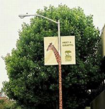 Campagna giraffa per lo zoo di San Francisco