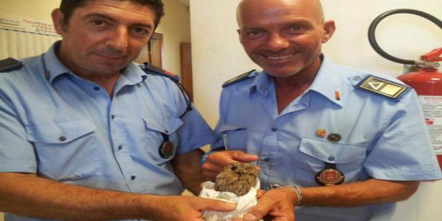 I Vigili salvano un piccolo gufo a Villa Trabia