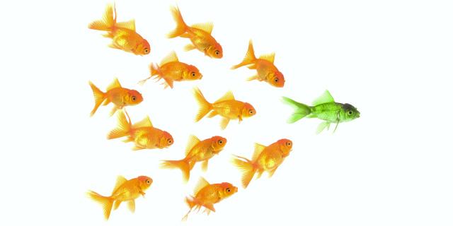 Dieci tipi di influencer