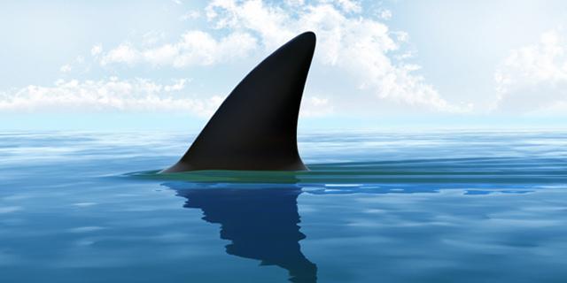 Pinna di squalo