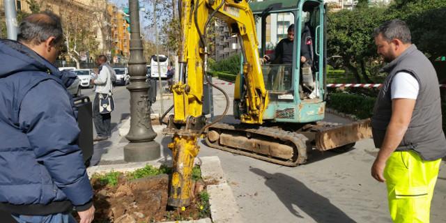 Nuovi alberi nella zona di via Libertà