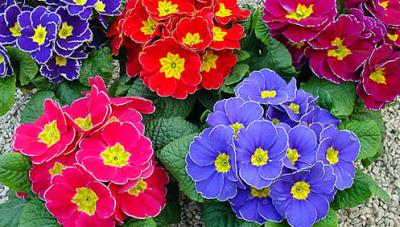Non privatevi dei fiori