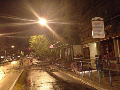 """""""Cleopatra"""" a Palermo, pioggia e rami spezzati"""