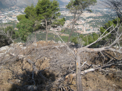 Alla scoperta della Riserva naturale orientata Monte Pellegrino (!)
