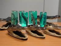 Squali e teste di coccodrillo sequestrati a Fiumicino