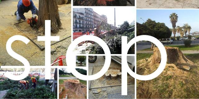 Diffida dal Comune di Palermo per mille alberi da abbattere