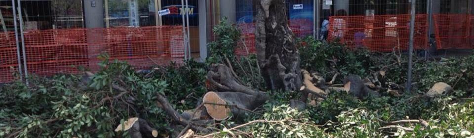 Tutti i post su #Ficus microcarpa