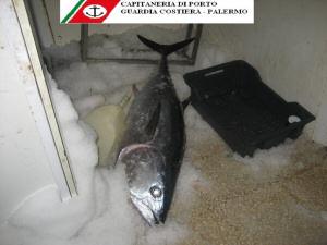 Sequestrato tonno rosso non idoneo al consumo, attenzione alta
