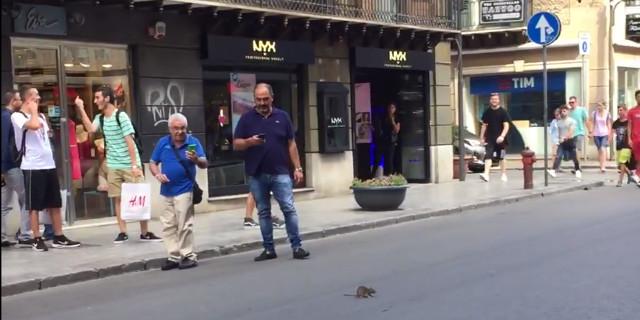 Urla in un negozio in via Ruggero Settimo per un topo