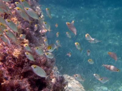 Pesci a Pietra Piatta